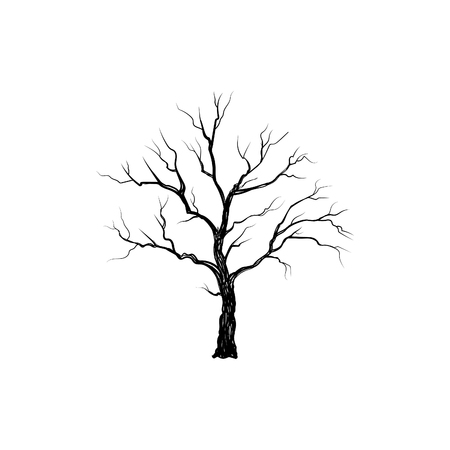 Tree without leaves isolated. Nature sign Vector illustration