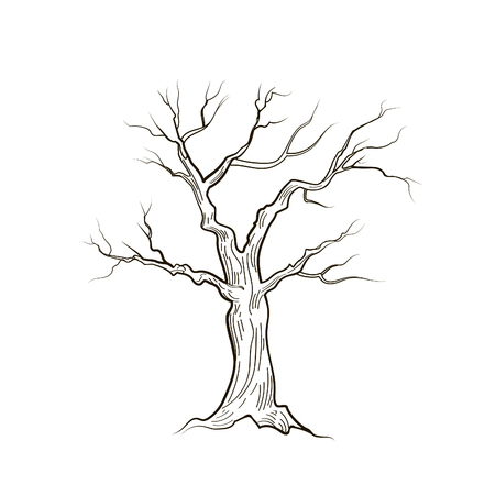 격리 된 나뭇잎없이 트리입니다. 자연 로그인 벡터 스케치