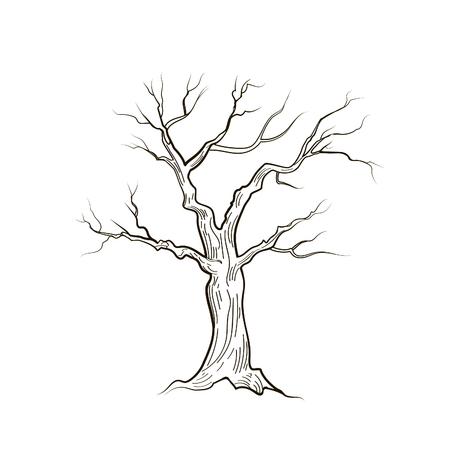 Drzewo bez liści izolowane. Charakter szkic wektora szkicu Ilustracje wektorowe