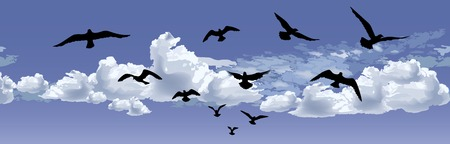 Bird flying silhouette over blue sky background. Animal wildlife skyline