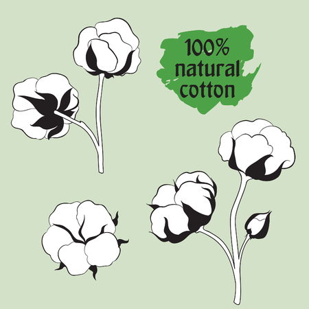 boll: Cotton label.  Natural material sign. Flower cotton set. Hand drawn floral icon