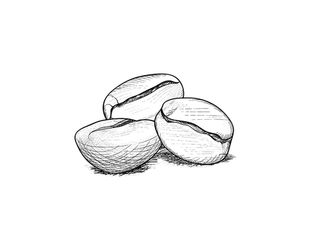 Coffee beans. Coffee icon set sketch. Line art doodle illustration