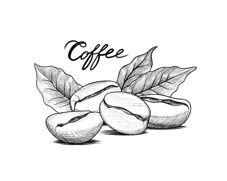 Coffee beans with leaves and handwritten lettering. Drink coffee banner hand drawn sketch. Line art label over white background