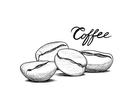 Coffee beans with handwritten lettering. Drink coffee banner hand drawn sketch. Line art label over retro background.