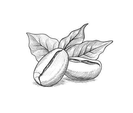 Coffee beans with leaves. Drink coffee banner hand drawn sketch. Line art label over white background. Vettoriali