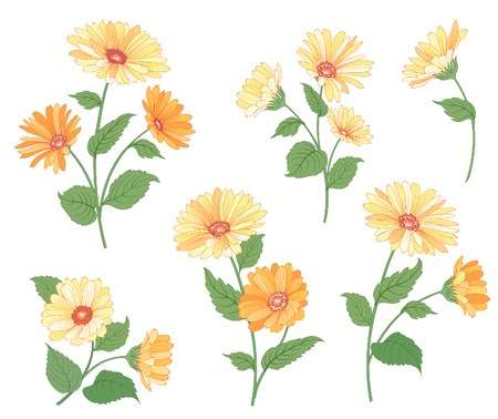Flower calendula bouquet collection over white background. Floral illustration set for greeting card design.