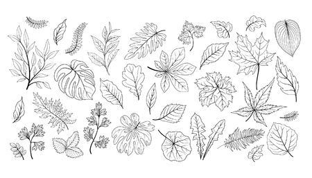 Leaves set. Different plant leaf herb floral sketch collection. Tropical garden leaf line art icon set