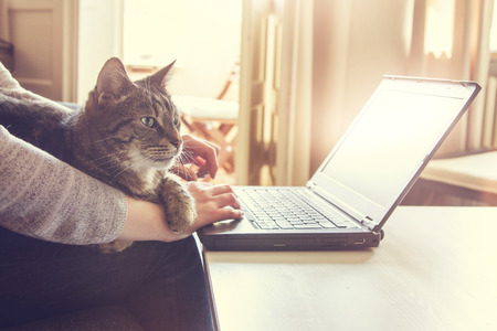 Woman and her contented tabby cat, who is lying across her lap and arm, working on a laptop computer at home typing in data, close up view