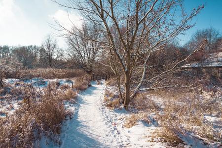 huellas de animales: camino rural cubierto de nieve con huellas de animales que llevan lejos a trav�s de campo abierto en un paisaje de invierno bajo un cielo azul soleado Foto de archivo