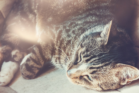 sleeping cat in a bed with beautiful lens flare Imagens