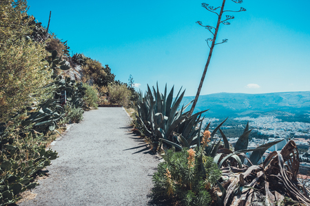 Mountain walkway lined with tropical plants and aloes overlooking Athens, Greece leading to a tourist outlook for sightseeing and viewing the city