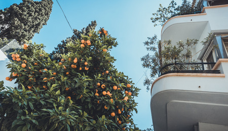 Low angle view of orange tree beside balcony with round corners on luxury apartments in Mediterranean country Imagens