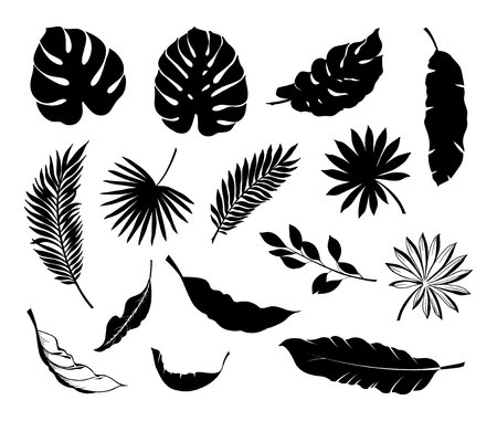 Set of Tropical leaves. Collection black leaves palm, fan palm, banana leaves. Vector illustration