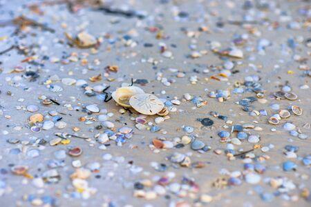Single sand dollar among many sea shells 写真素材