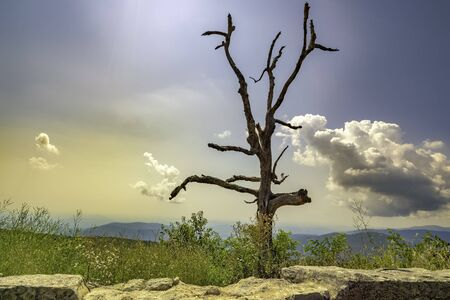 Dead tree along the skyline drive national park. The skyline drive is 105 miles long and runs along the blue ridge parkway in the appalachian mountains.