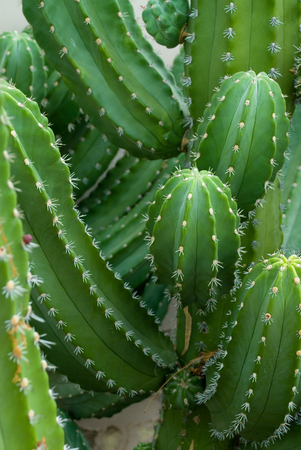 Spikes of a Cactus