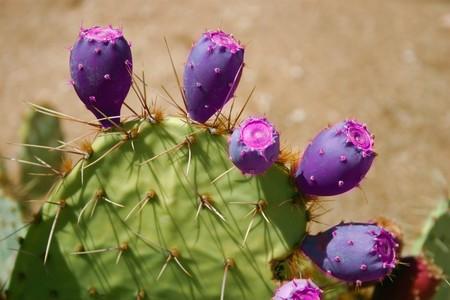 mescaline: Cactus Stock Photo