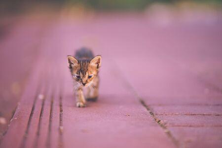 lonely kitten  walking on the street Banco de Imagens