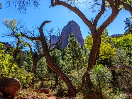 ザイオンにある変な木に囲まれた奇妙な崖