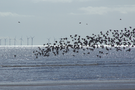 Wildlife, birds and offshore wind turbines existing together.