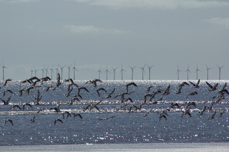Wildlife and offshore wind turbines existing together.