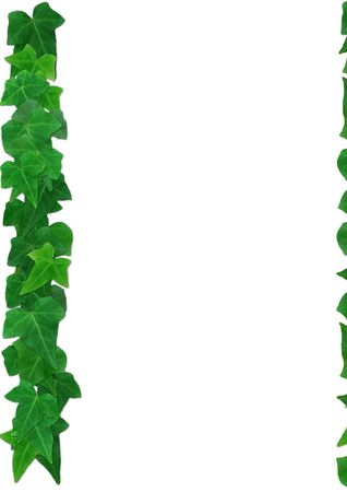 helix border: Green English Ivy leaves frame on a white background