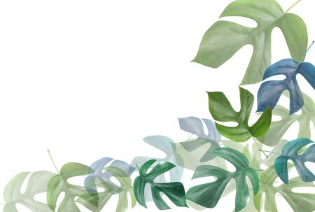monstera leaf: Monstera frame