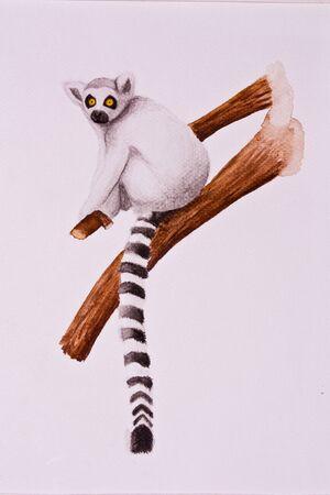 drawing lemur  photo