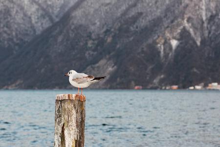 Two seabirds in winter