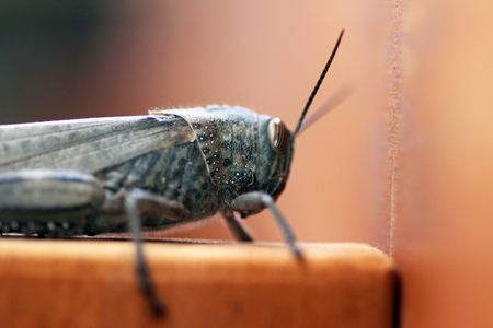 Close to a grasshopper