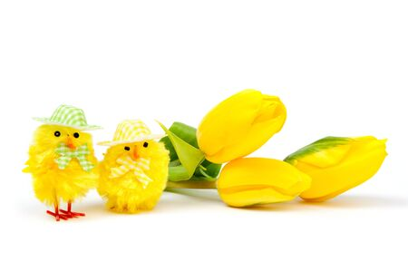 Yellow chickens with tulips on white background