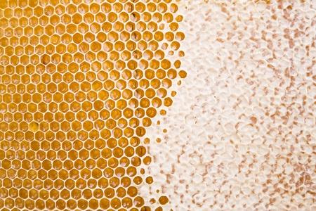 honeyed: Part of fresh honey in comb texture