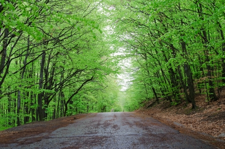 An image of a road in green forest photo