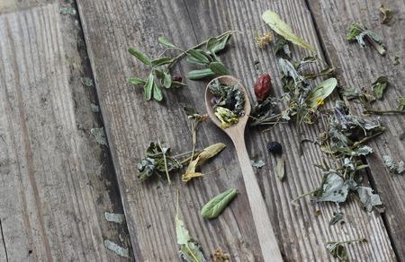 plantas medicinales: Cuchara de t� herbsl a base de plantas medicinales Vaus, enfoque selectivo