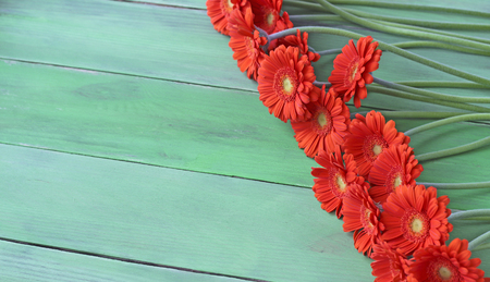 gerbera daisies: Orange gerbera daisies on a green plank background,  free text place, holiday concept