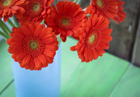 gerbera daisies: Bouquet of orange gerbera daisies in a vase on a window, natural daylight