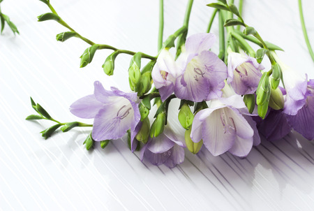Bouquet of freesias flowers on white background, toned, soft selective focus Stock Photo