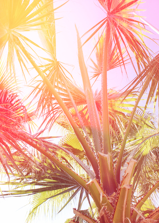 Tropical palm tree with sun flares, light leak effect filter, tropical retro color effect Stock Photo