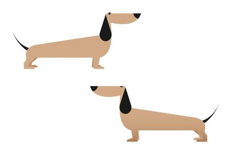 Dog character. Animal. Dachshund.  Vector illustration design concept.