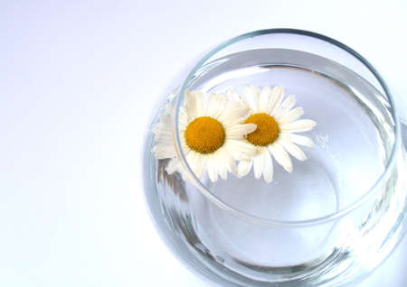 balmy: Two camomiles swimming in the vase Stock Photo