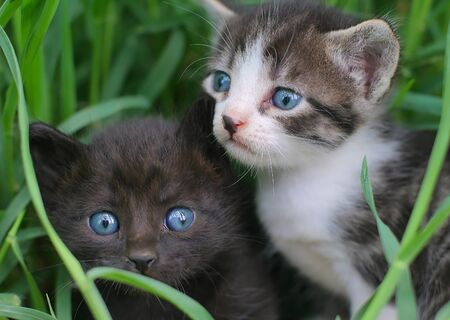 bimbo: Two baby cats in the grass Stock Photo