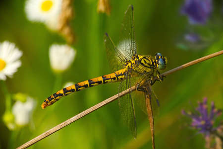 libel: Colorful Dragonfly on a Colorful Lawn