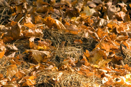 natureal: leaves and hey in autumn Stock Photo