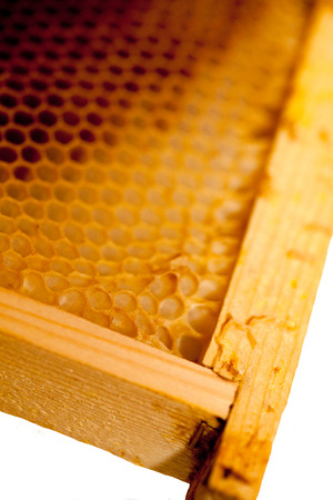 Honeycomb with honey and wax