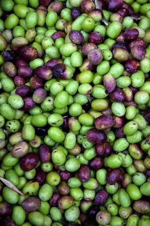 Fresh black and green olives sold at a market Standard-Bild