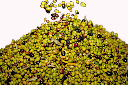 Fresh black and green olives