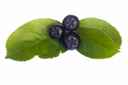 black chokeberries with leaf separated on white