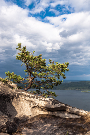Crooked small pine at the edge of the cliff lit by sun