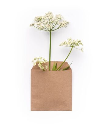 Herbs in craft paper envelope on clean white background