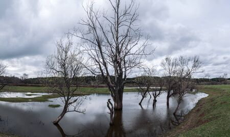 Gloomy landscape with group of trees standing in water during the spring flood of the river. Clouds in the sky